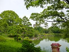 Audino in Fukagawa, Tokyo 196 (Kiyosumi Garden)