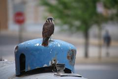 Urban Bird Watching