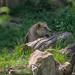 scorpio71gr posted a photo:Taken at John Ball Zoo