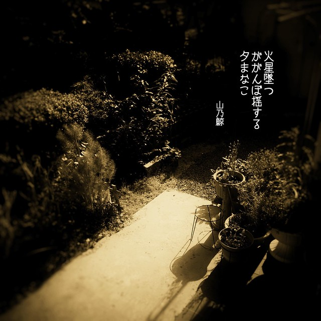 Photo:火星墜(お)つ ががんぼ揺する 夕(ゆふ)まなこ[山乃鯨] #haiku #photohaiku #poetry #summer #micropoetry #夏 #フォト俳句 #写真俳句 #俳句 #snapseed #phonto #jhaiku #3lines #poem #shortpoem #verse #autismawareness #autismacceptance #mpy #autisticpoetry #autismpoetry #actuallyautistic By Atsushi Boulder