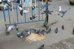 Pigeons at Darjeeling Station