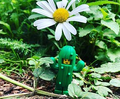 At home with nature series no2 #brickstameetlondon #igerslondonloveslego #igerslondon @brickstameet #cactus #london_only #streetshooter #unlimitedlondon #timeoutlondon #legominifigures