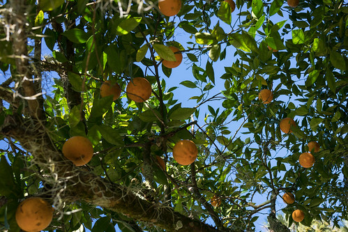 alachuacounty florida trees landscape sky 2016 orange