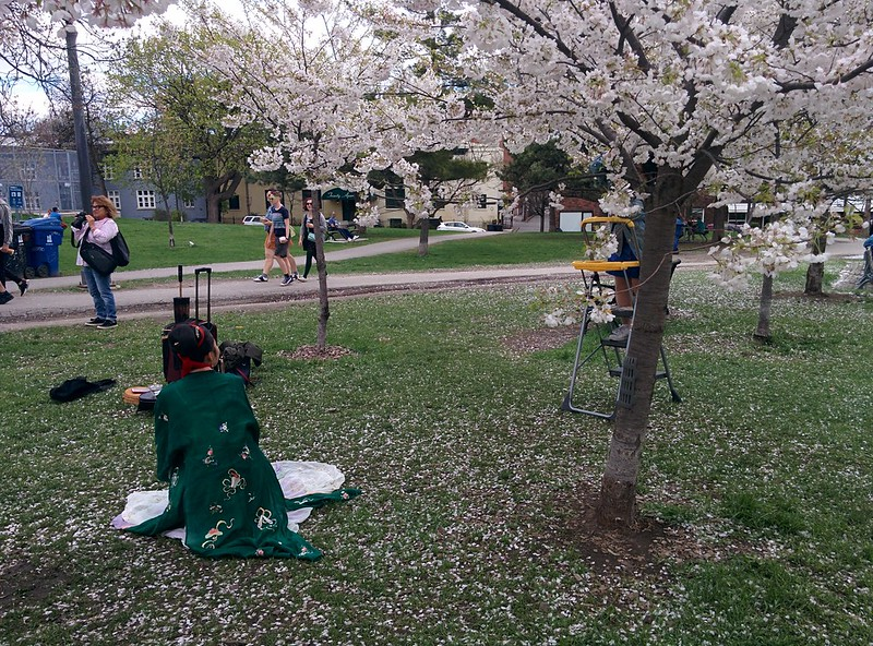 Sakura of Trinity Bellwoods (6) #toronto #trinitybellwoods #parks #sakura #cherryblossom #latergram