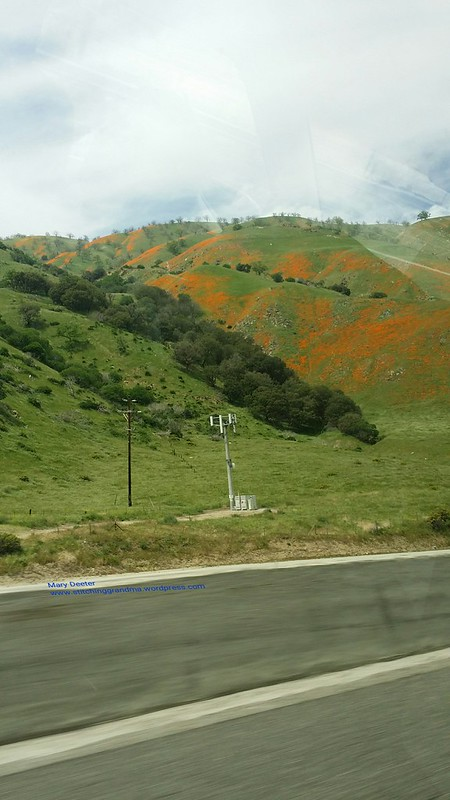 Hills ablaze in poppies