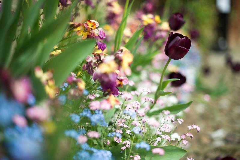 A por el tulipán negro