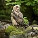 Eagle Owlette