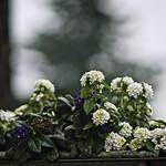 2018:06:14 21:54:13 - Flower Bokeh - Tarbek - Schleswig-Holstein