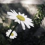 20180526-144845 - Spring Flower Bokeh