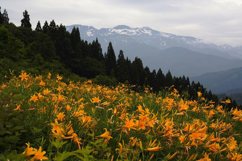 Hakusan Alpine Botanical Garden