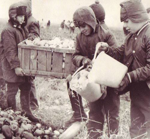 Raiul comunist: copii adusi cu forta la cules recolta