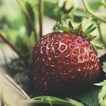 20180530-180946 - Garden Strawberry Bokeh