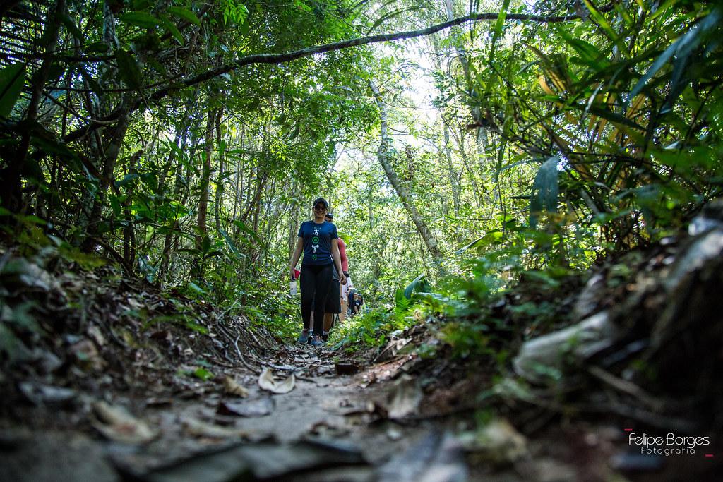 Trilha na floresta organizada por blogueiros reúne 120 pessoas em Santarém, Trilha na flooresta