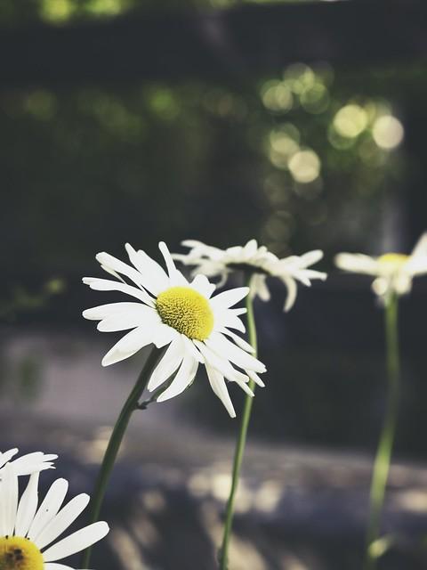 20180606-163513 Flower Bokeh