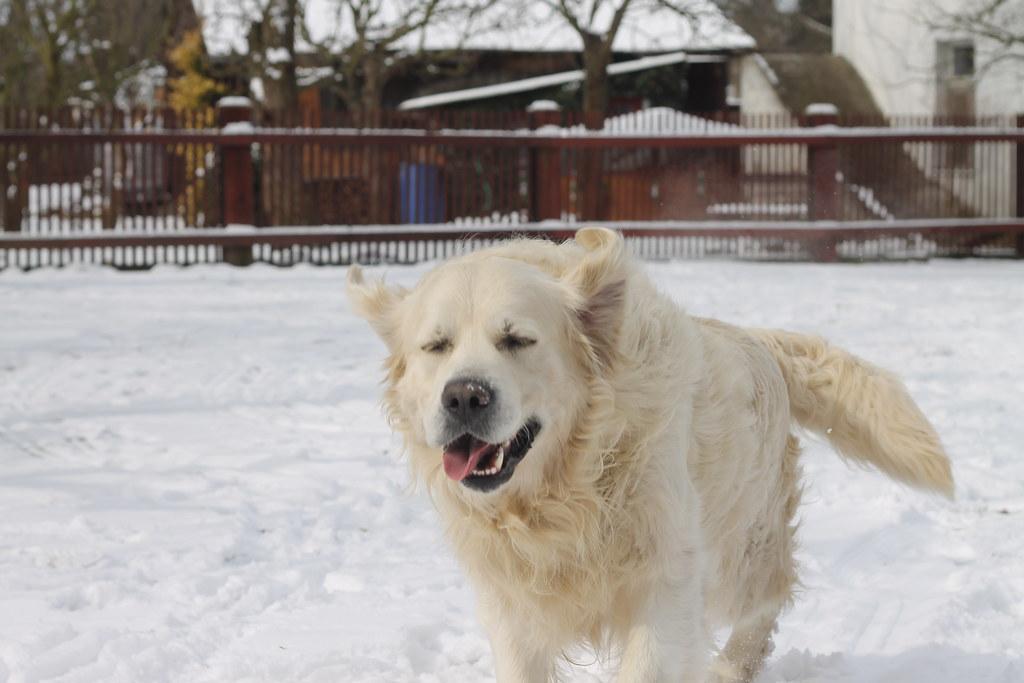 Run doggie run!
