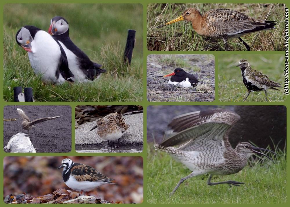 Birds-1-collage-a