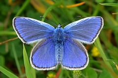 Empingham Butterflies