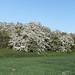 Blooming May