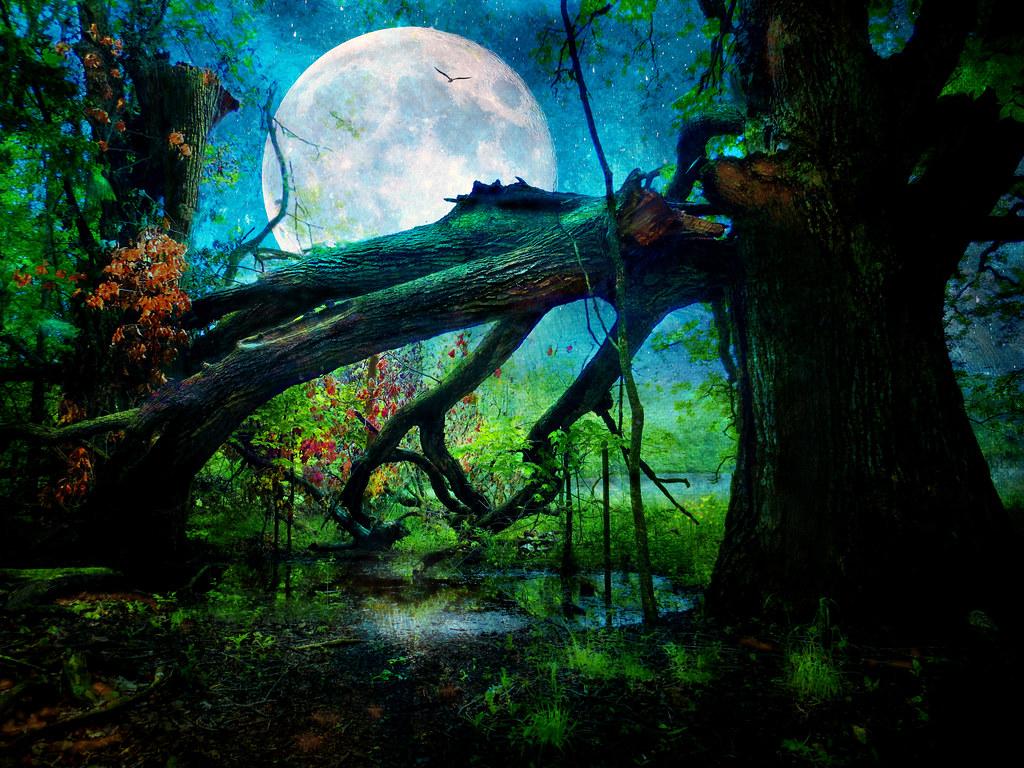 Broken Branch under the Full Moon