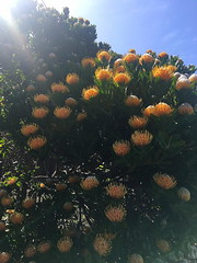 Loma Vista Gardens, Big Sur, California. April/2018