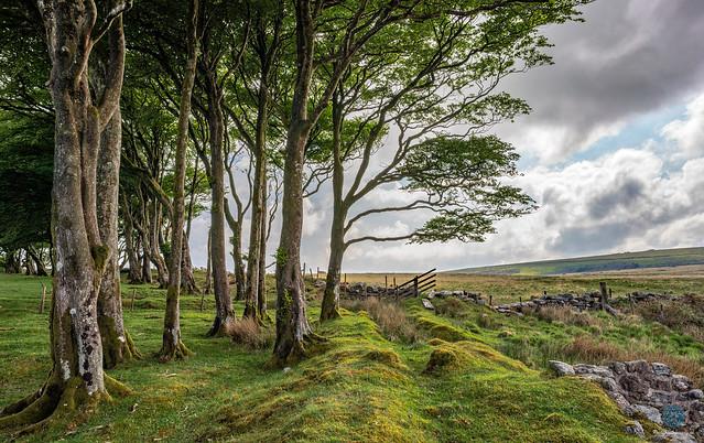 Powder Mills - Dartmoor
