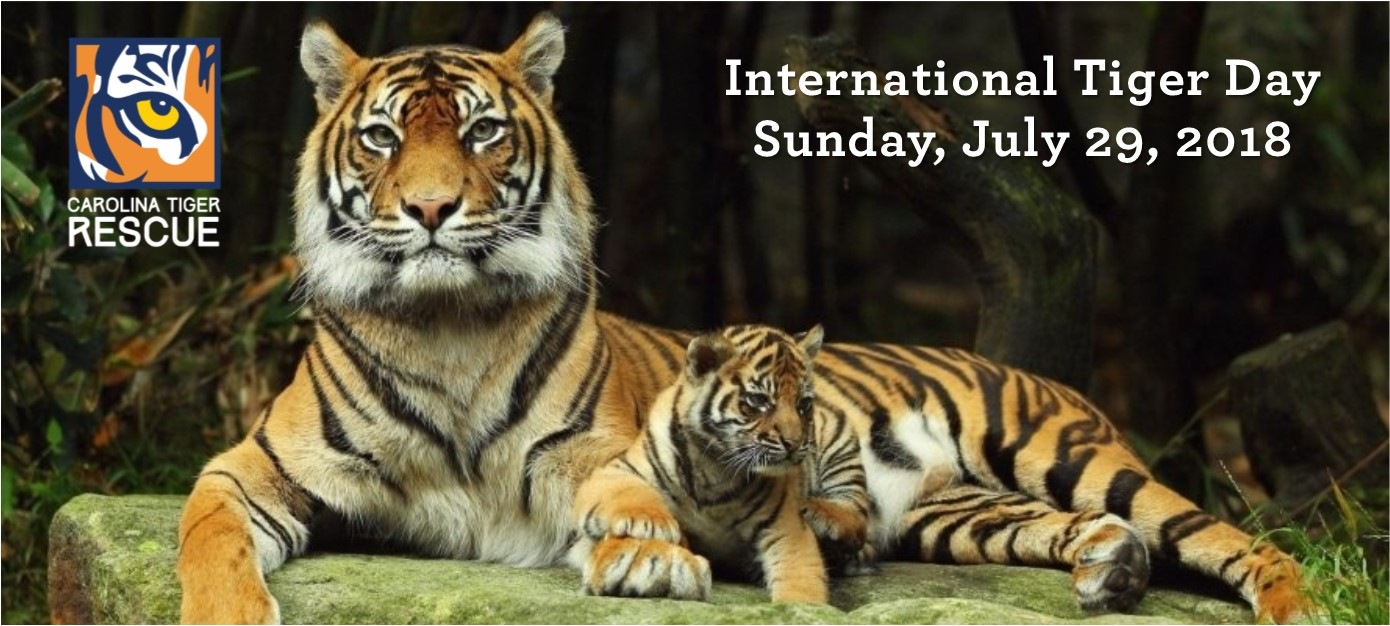 Image result for international tiger day 2018 images