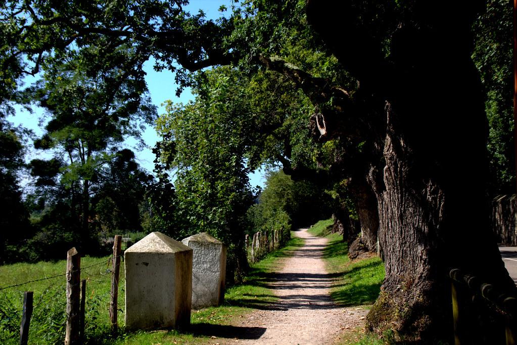 sendero bajo las ramas de robles centenarios