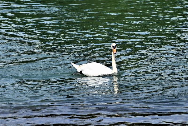 Swan 10.06 (1)