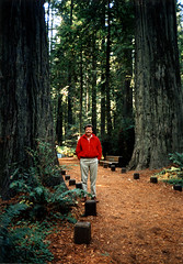 photo - Founders Grove, Humboldt Redwoods State Park