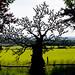 Zadok Ben-David - Exotic Tree