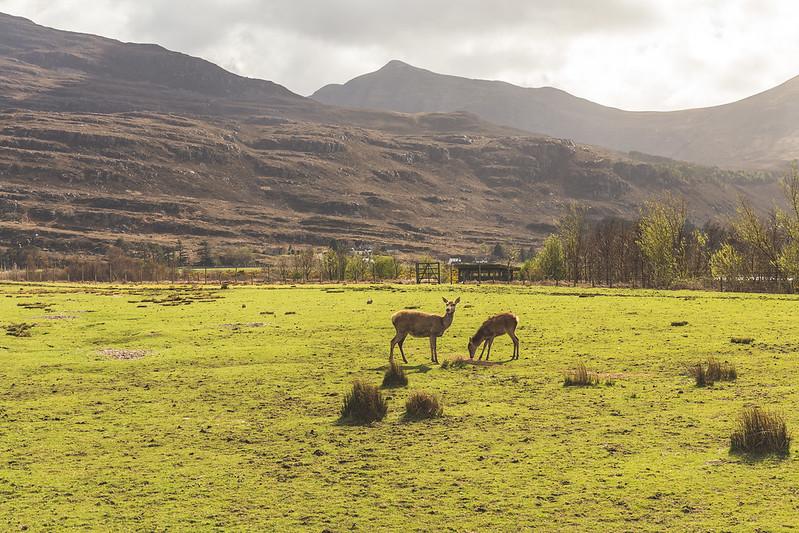 Deer Museum - Torridon - Scotland 2017
