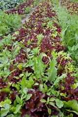 Emilie Organic Only Farm web-7797