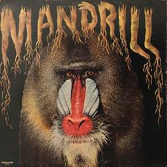 MANDRILL:MANDRILL(JACKET A)