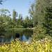 Pond L