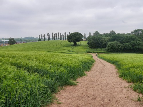 Field Views at Cofton Hackett