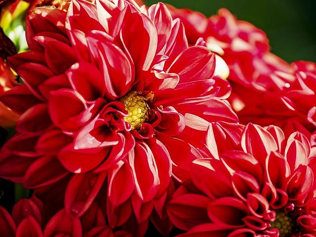Blumengruß - floral greeting, Panasonic DC-G9, Lumix G Vario 14-140mm F3.5-5.6 Asph. Power OIS