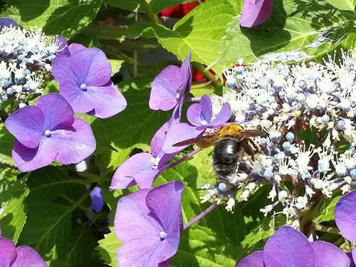 デジタルズームを使いつつ、蜂を撮ってみた。 #nofilter #huawei #mediapadm5pro #HUAWEIタッチアンドトライ