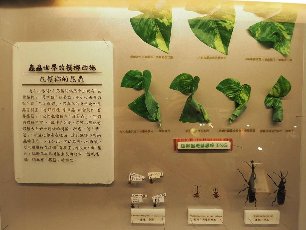 新嘉大昆蟲館 (6)