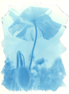 Cyanotype print made on an old photographic enlarger directly from 120 negative film without using a conventional contact printer and digital processing