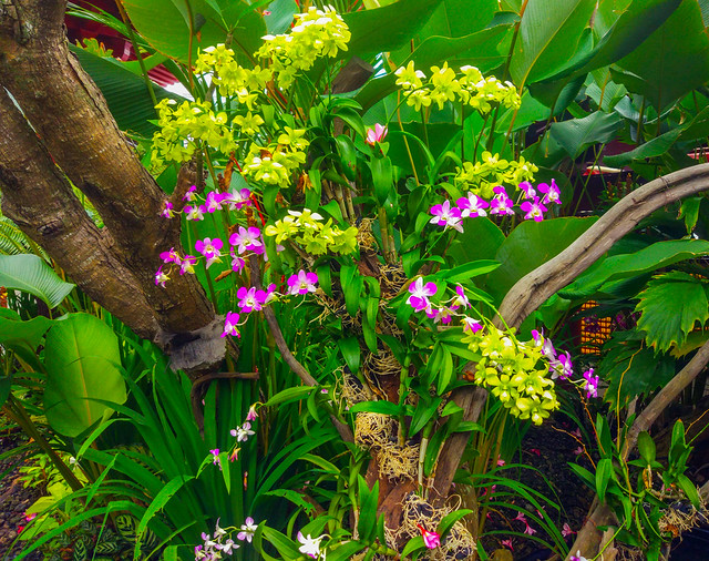 Orchids on the Roof Garden, Buddha Tooth Relic Temple & Museum, 288, South Bridge Road, Singapore
