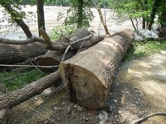 DSCN4074 04 Lock 32 Ash Debris & Erosion