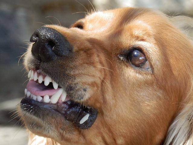ストレスからのSOSで人をかもうとする犬