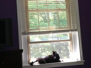 never happier than in an open window