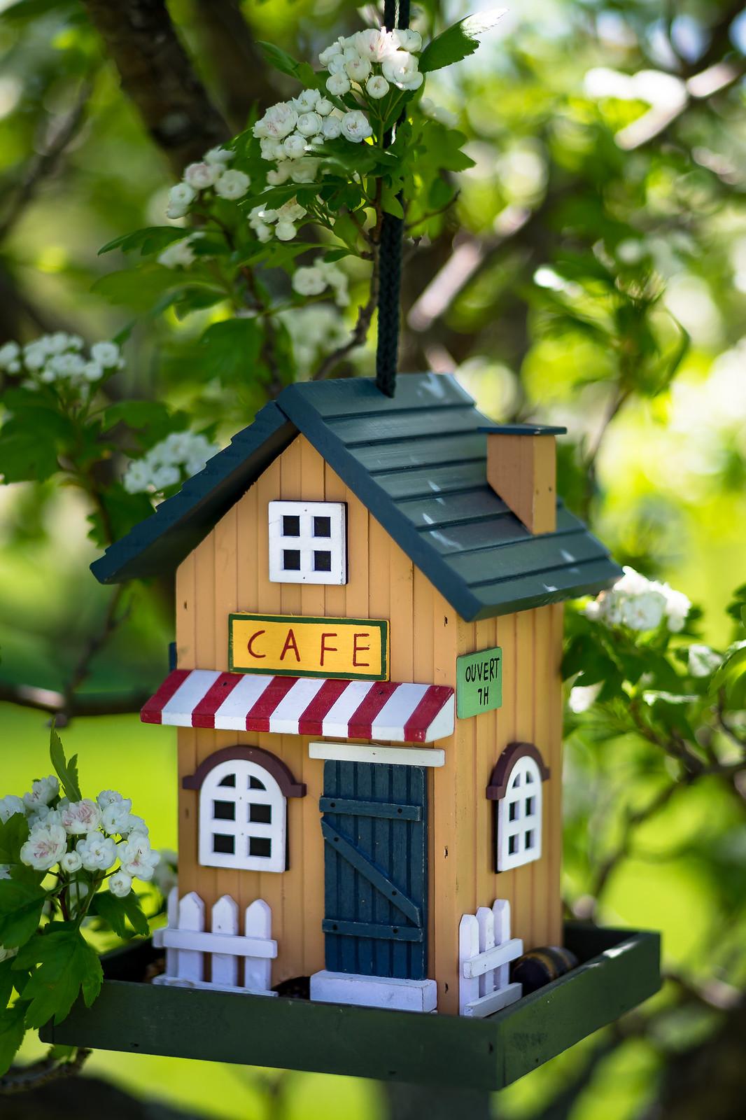 Le café des chardonnerets... 42782893941_04fff83943_h