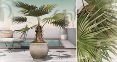 hive // potted fan palm plant | fifty linden friday
