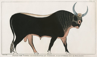 Plate 15 : The Apis Bull by Giovanni Battista Belzoni (1778-1823) from Plates illustrative of the researches and operations in Egypt and Nubia (1820).
