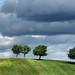 Marche countryside  - Cingli by Luigi Alesi