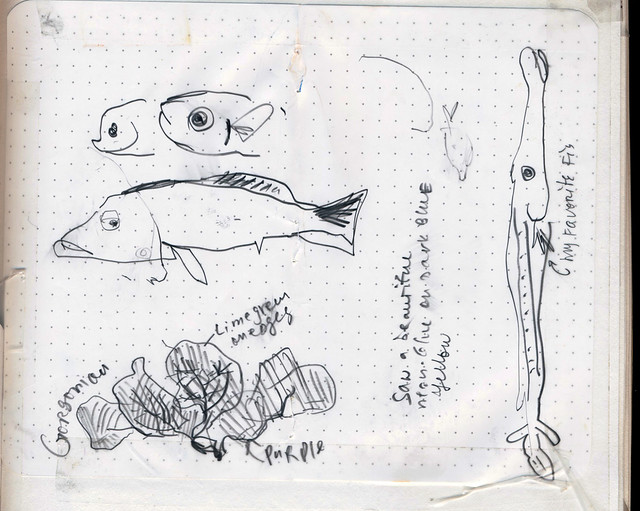 Sketchbook #113: Trip to Bonaire - Underwater Sketching / Scuba Diving with a Sketchbook