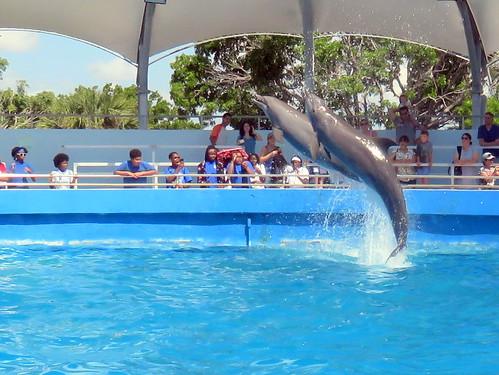 Seaquarium dolphins 07-20180604