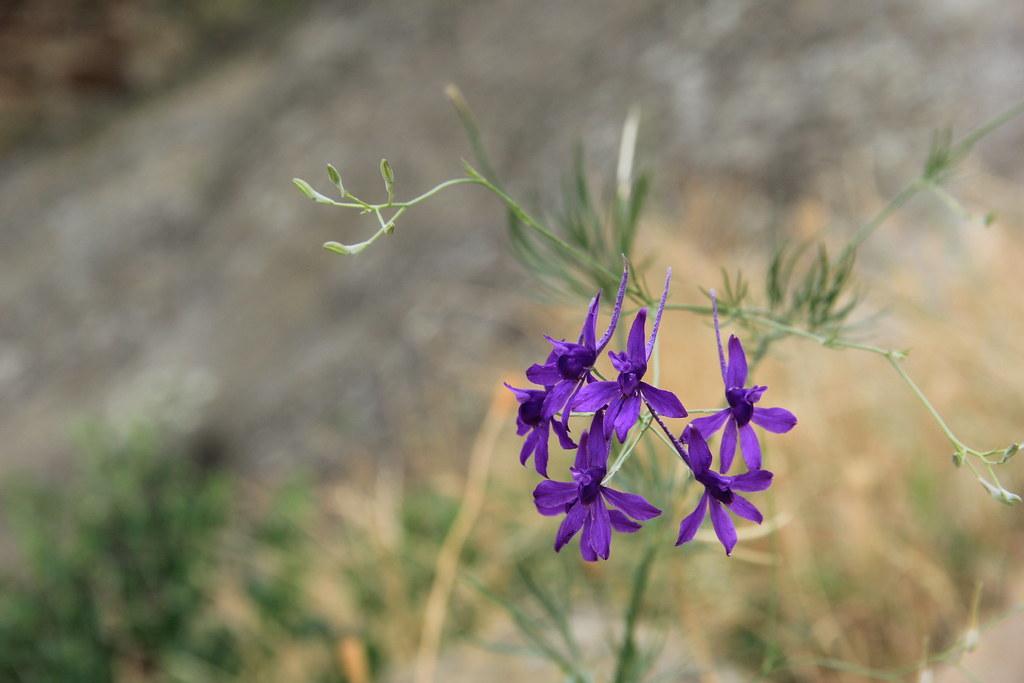 Flowers, Davit Gareja